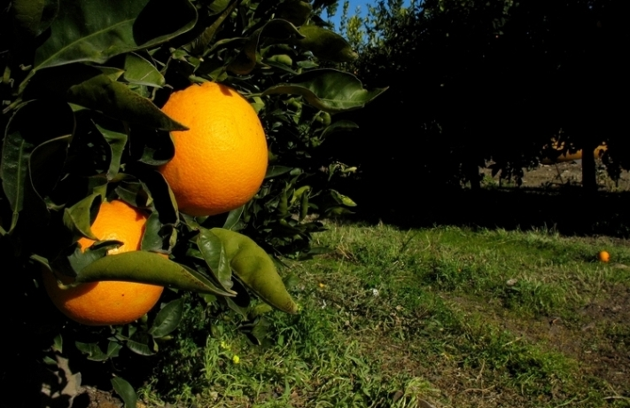 le arance rosse dell'etna